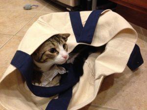 torba bawełniana